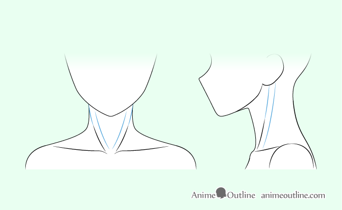 Anime sternocleidomastoid muscles