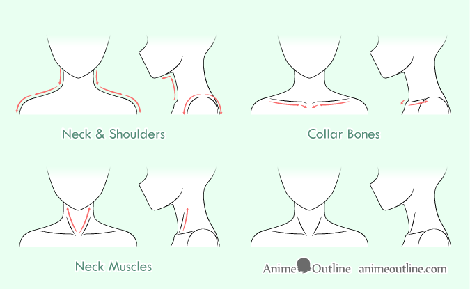 Anime neck & shoulders drawing step by step