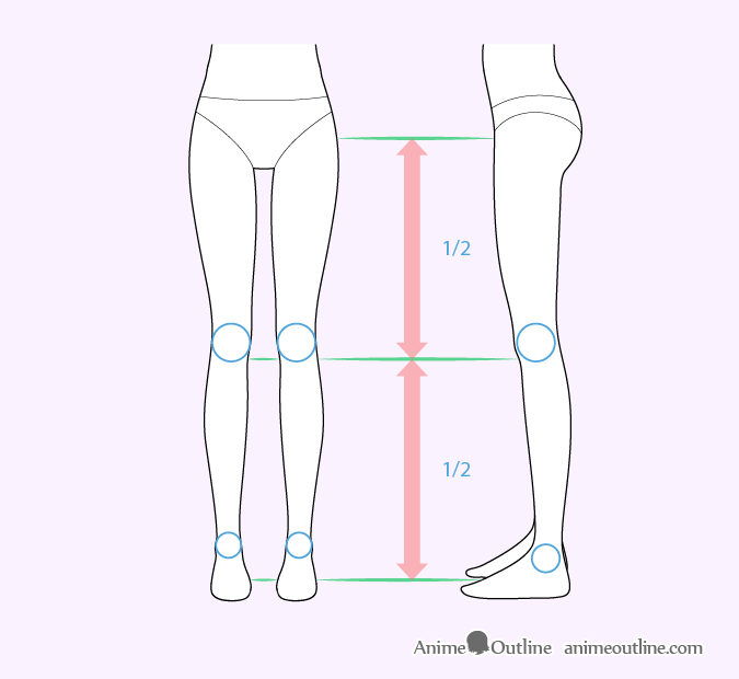 Female anime leg proportions