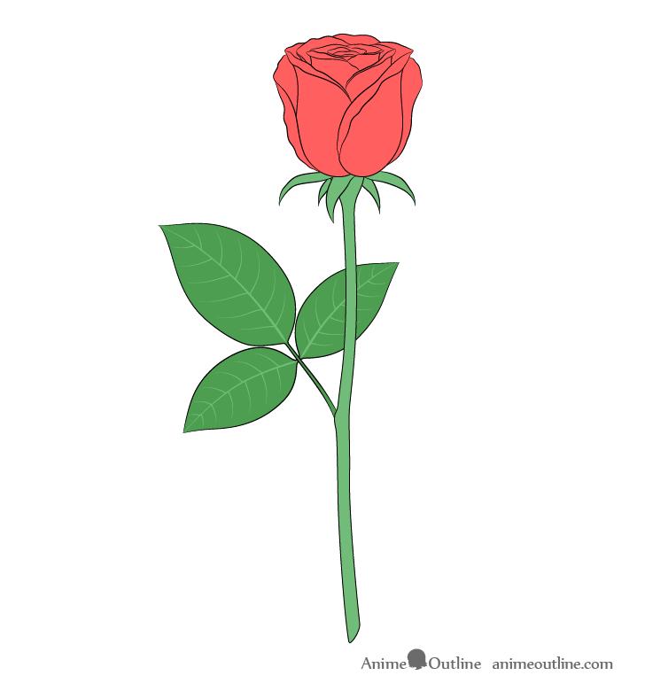 Rose color drawing full