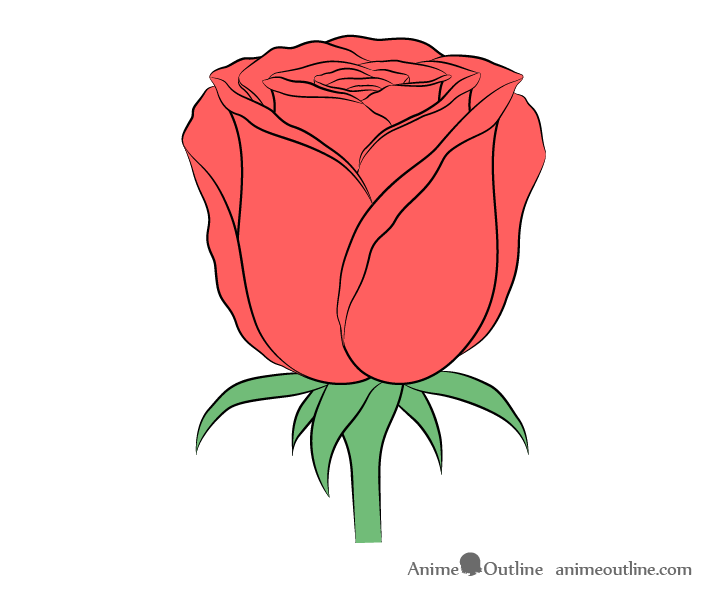 Rose flower color drawing