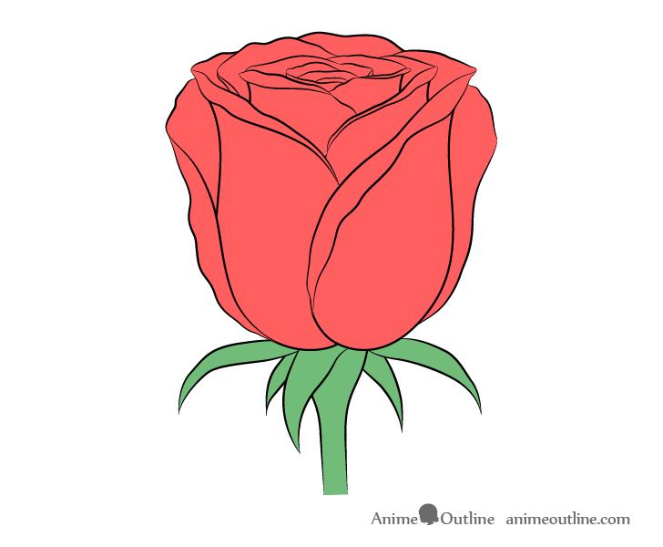 Rose flower color drawing