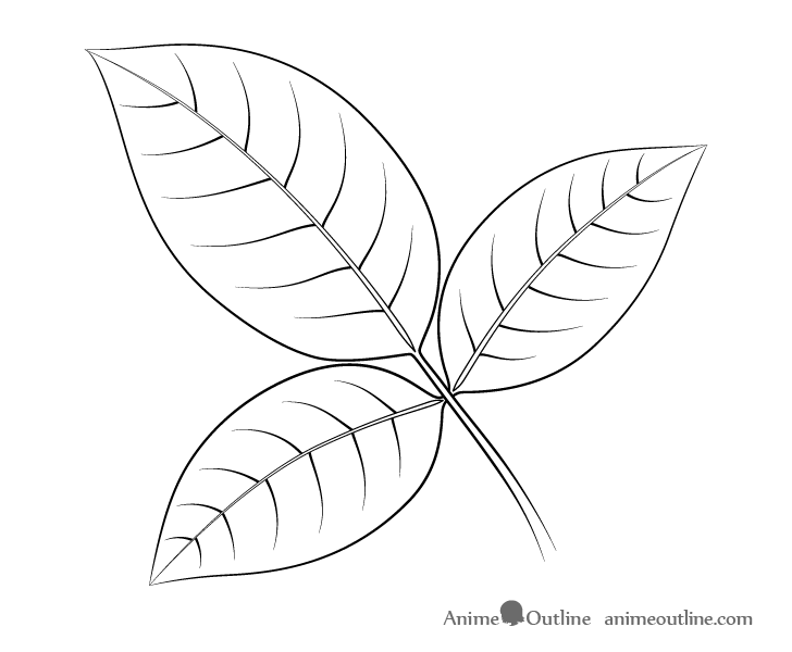 Rose leaves line drawing