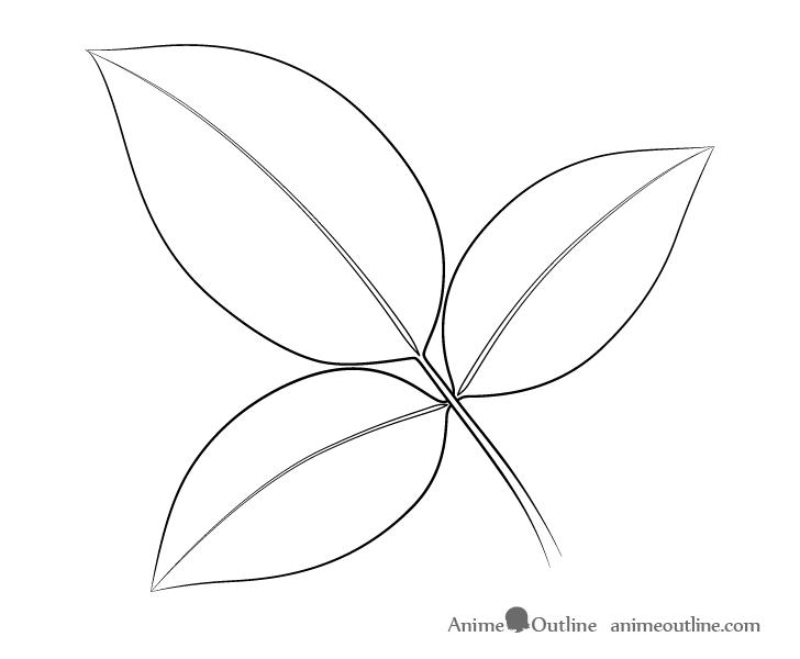 Rose leaves petioles drawing