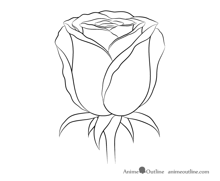 Rose flower line drawing