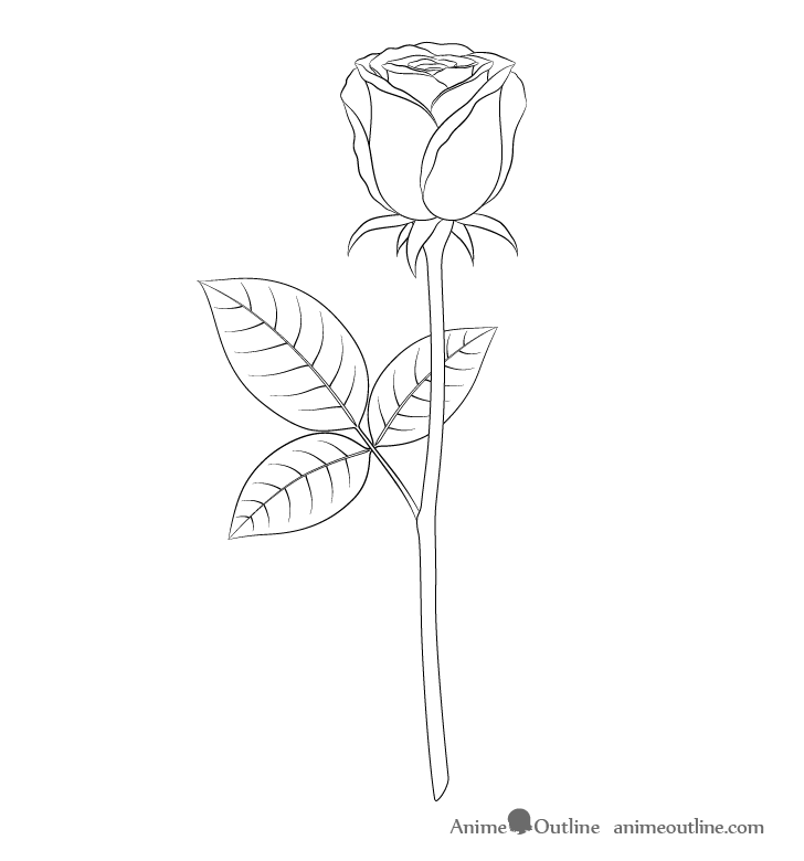 How To Draw A Rose Step By Step Animeoutline